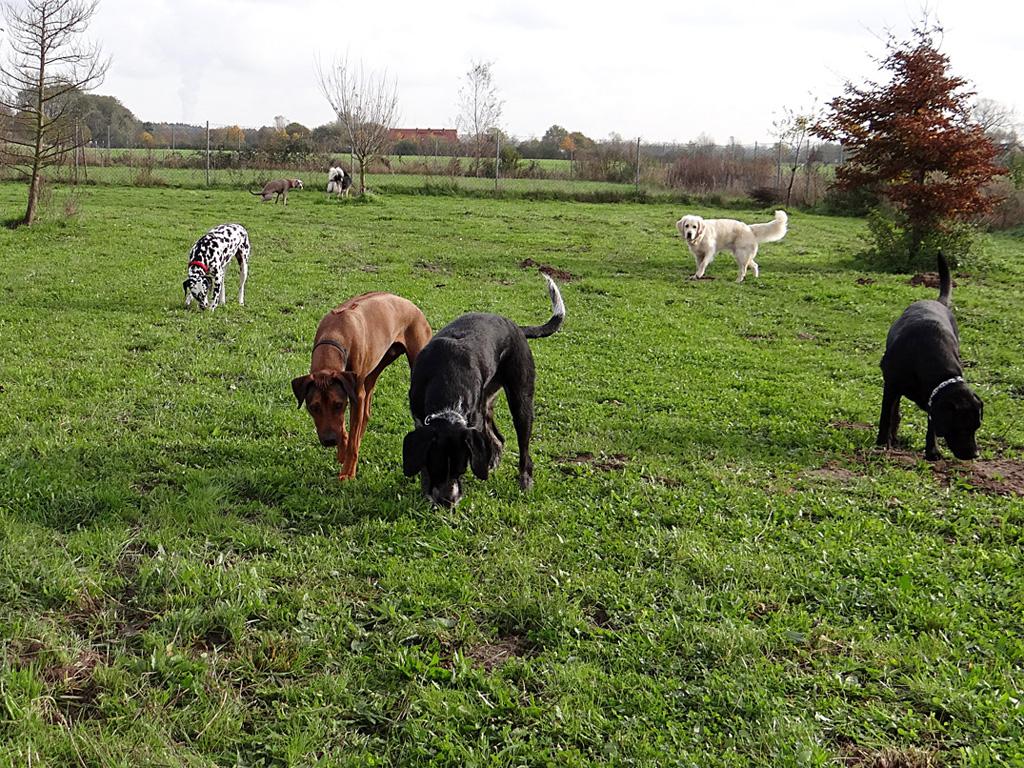 hunde tagesbetreuung frechen