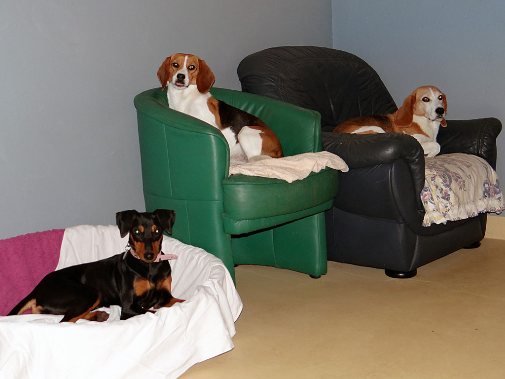 hundebetreuung rostock